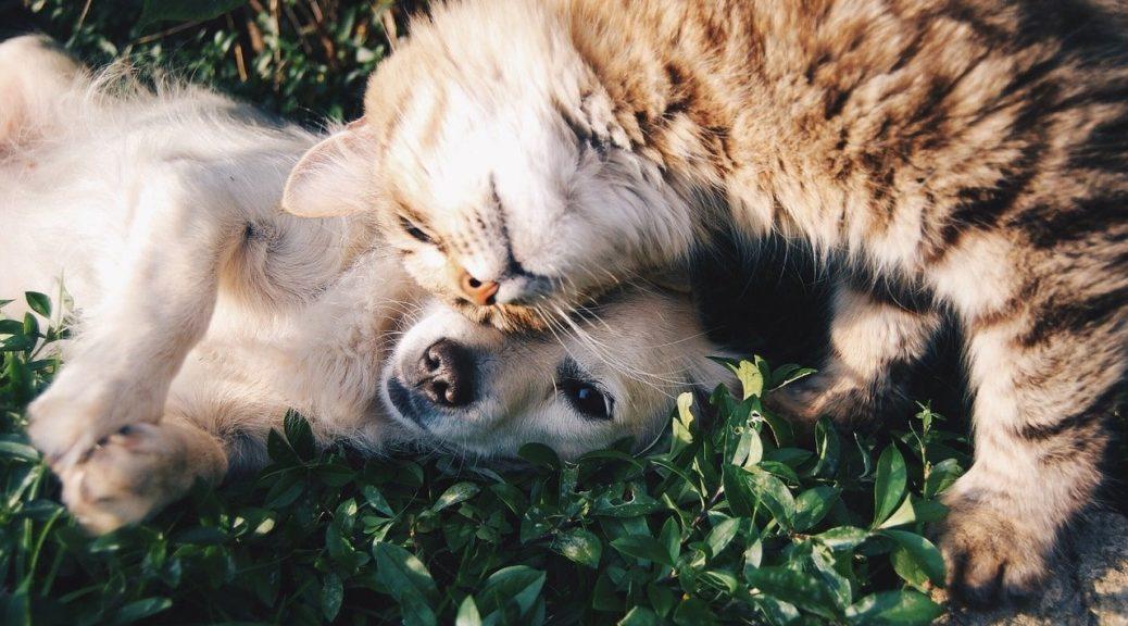 assurance pour chiens et chats